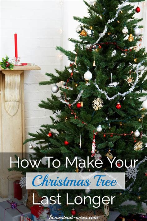 how long do real christmas trees last how to make your tree last longer homestead acres
