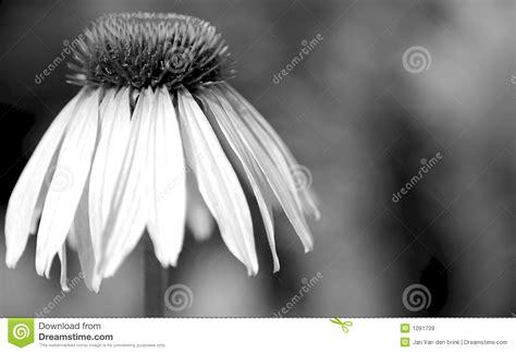 imagenes de flor triste flor triste imagem de stock imagem de celebratory fundo