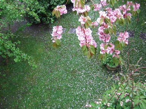 Villa Flora Wyk by Ferienwohnung Villa Flora F 246 Hr Frau Inge Borchert Busche