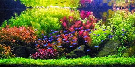 style aquascape understanding dutch aquascaping style the aquarium guide