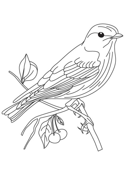 free coloring pages on bluebirds blue bird coloring page az coloring pages