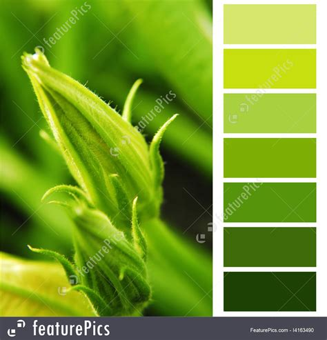green color swatches green color swatches image