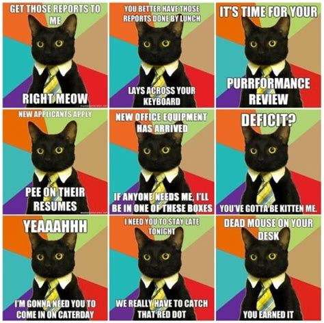 Office Cat Meme - 17 best images about office memes to be cats and office cat