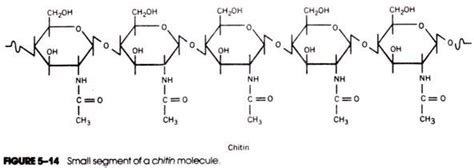 diagram of a polysaccharide useful notes on polysaccharides with diagram