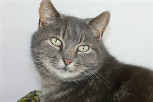 kittys cattery cattery worcester reviews