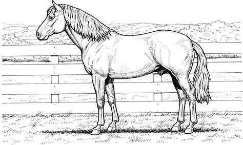 coloring pages animals horses coloring pages dr