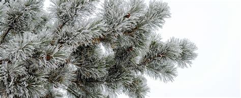 tree picks curbside tree up city of st albert