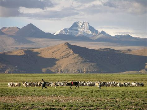 tibetan mountain tibet kailash 11 back 08 shishapangma checkpoint shepherd with mountains