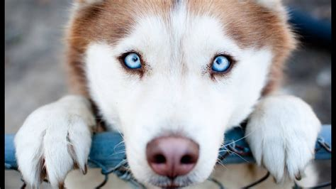 do dogs see color or black and white how do dogs see the world