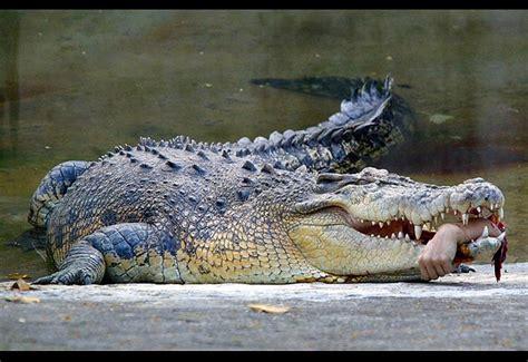 el cocodrilo al que no muerdas las mano que te da de comer hold hands and fight