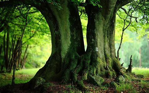 wallpaper green tree hd green trees wallpapers full hd wallpaper search page 2