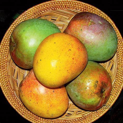 gets me mangoes books himayath also known as imam pasand these mangoes are