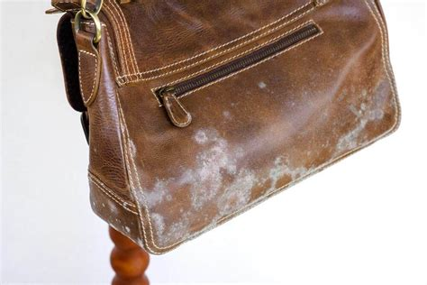 Mildew On Leather by How To Clean Mold From Leather Thecarpets Co