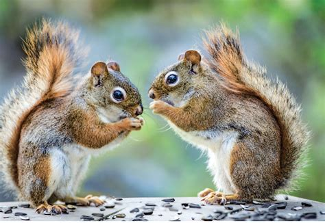 show me a picture book of book review the secret of squirrels a story