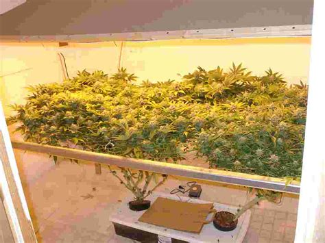 How To Keep Your House Clean All The Time by Aeroponics Grow Systems