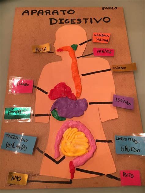 maqueta de sistema digestivo en plastilina m 225 s de 25 ideas incre 237 bles sobre aparato digestivo humano