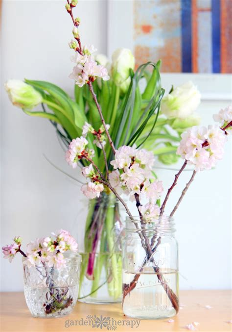 forcing flowering branches  bloom indoors