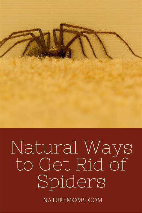 get rid mosquitoes backyard 100 get rid of mosquitoes in backyard here are the