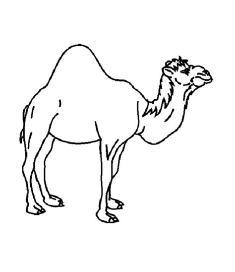 free coloring pages of a camel
