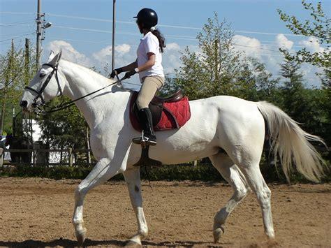 commercial girl riding horse file girl riding horse 1030856 nevit jpg wikimedia commons