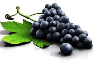 uva le uva propriet 224 benefiche cosmetiche e nutritive tanta