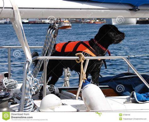 dog boat life jackets black dog with life jacket on sail boat royalty free stock