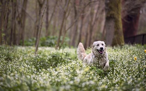 forest puppy forest flowers wallpaper 2048x1281 169549 wallpaperup