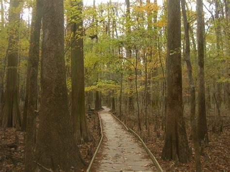 congaree national park backpacking