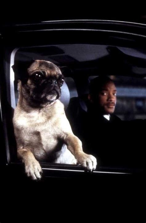 mib pug moviestar pug in black 1997 only way to be