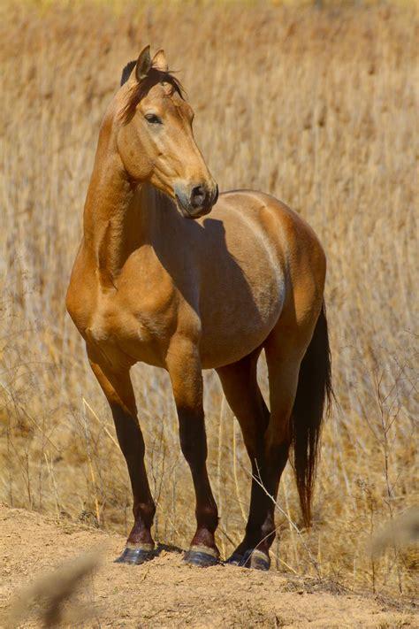 caballo cogida brutal por detras caballo posando horse posing by santi sb ssberman