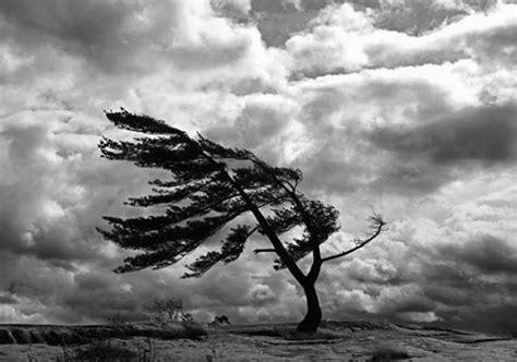 imagenes sensoriales en una tempestad el 225 rbol en la tempestad el despertar de la conciencia