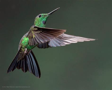 nature blows my mind hummingbirds and their freaky flying