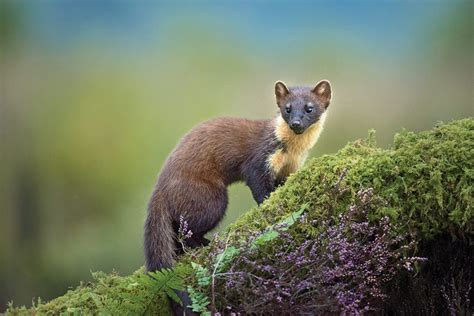 Nikon P900 Wildlife by Using The Nikon D810 For Wildlife Photography Nikon Rumors