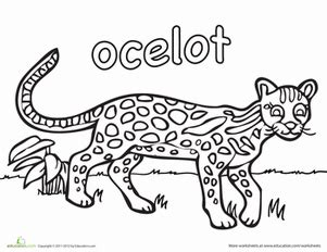 Baby Ocelot Pages Coloring Pages Ocelot Coloring Page