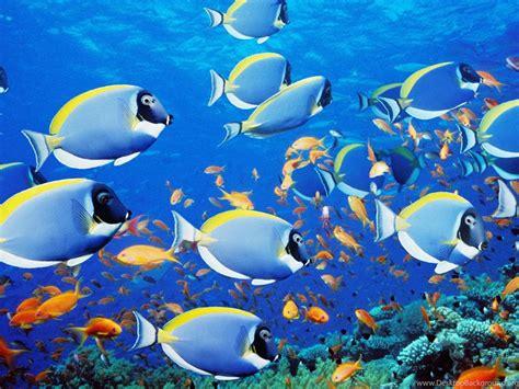 cool  screensavers animated screensaver fish desktop