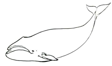 bowhead whale coloring page how to draw a bowhead whale