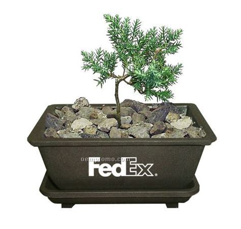 Bonsai Tree Planters by Mini Bonsai Plant In Plastic Planter China Wholesale Mini