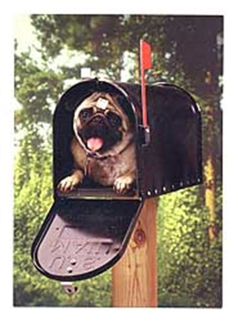 pug mailbox pugs dogbreed gifts pug greeting cards notecards