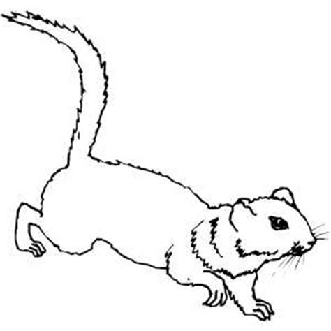 ground squirrel coloring page ground squirrel coloring sheet