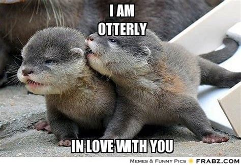 Cute Love Memes - i am otterly in love with you meme cool cute stuff