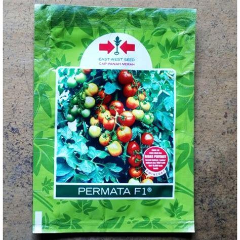 Benih Tomat Permata F1 jual benih tomat permata f1 panah merah