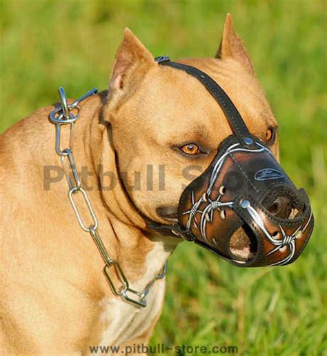 muzzle for pitbull best leather muzzle for pit bulls pit bull terrier m53 1077 painted muzzle