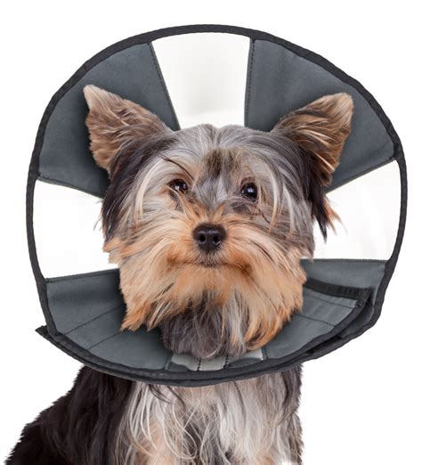 cone for dogs zen cone zen pet usa