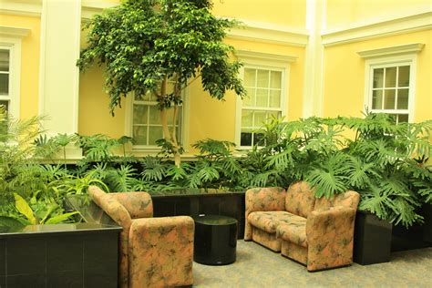 indoor plants talking about turning your home green