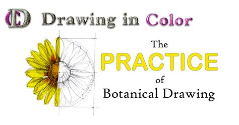 patterns in nature topic test online drawing course colored pencil illustration draw