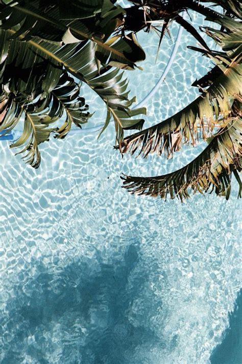Pflanzen Im Garten 2567 by Palms Sun Lettering Editorial Dise 241 O