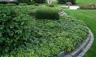 low maintenance landscaping plants low maintenance landscaping plants