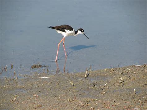 san joaquin wildlife sanctuary 99 photos parks 5