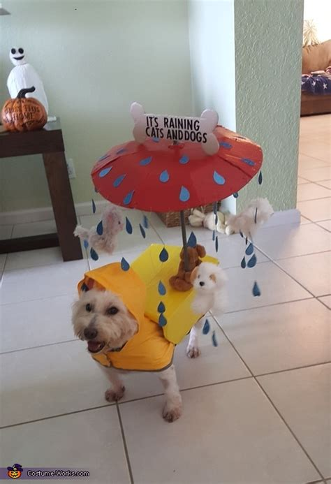 raining cats  dogs halloween costume