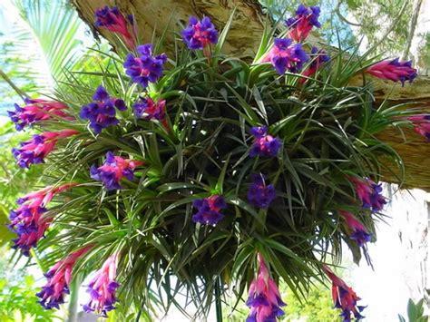 Stabillo Flower Stabillo Motif Bunga cara menanam dan merawat tillandsia